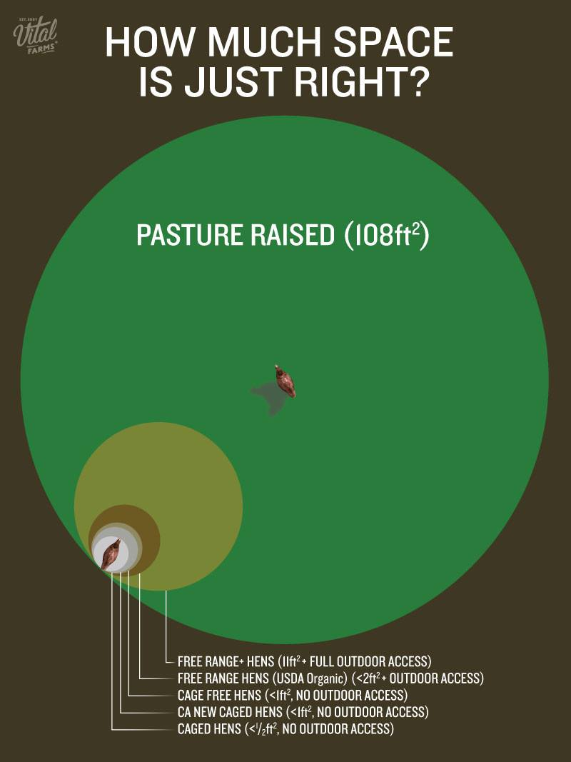 pasture-raised-vitalfarms